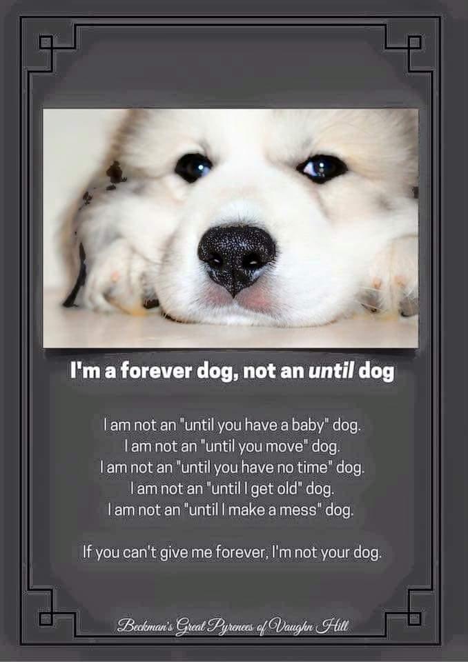 Every dog we adopt!