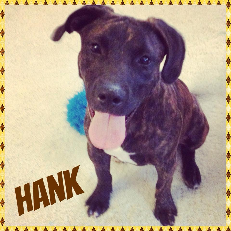 Hank (TN Foster)
