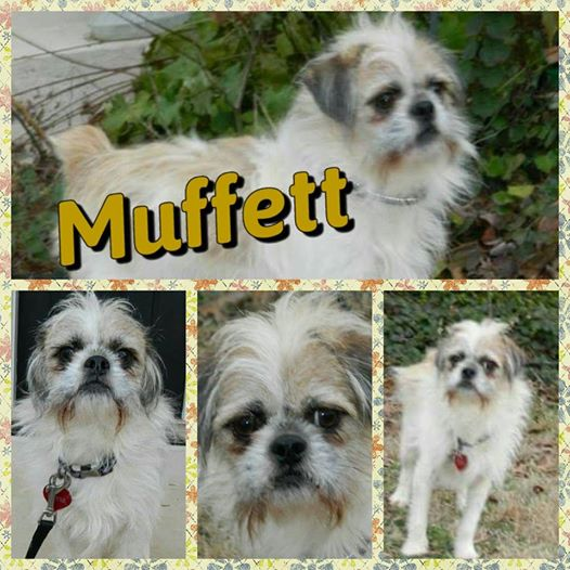 Muffett