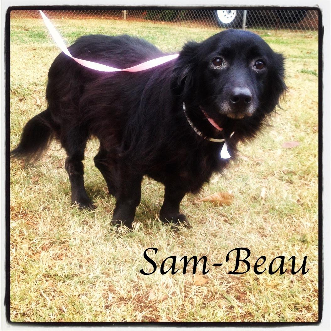 Sam-Beau